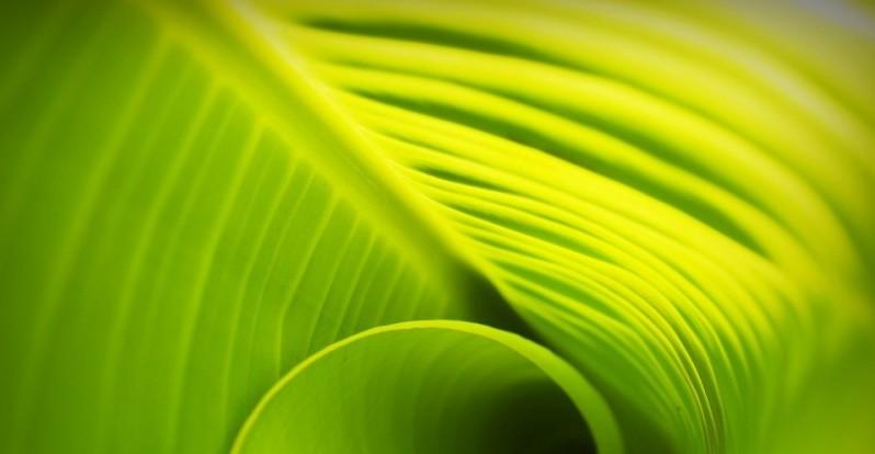 leaf-1551202_960_720